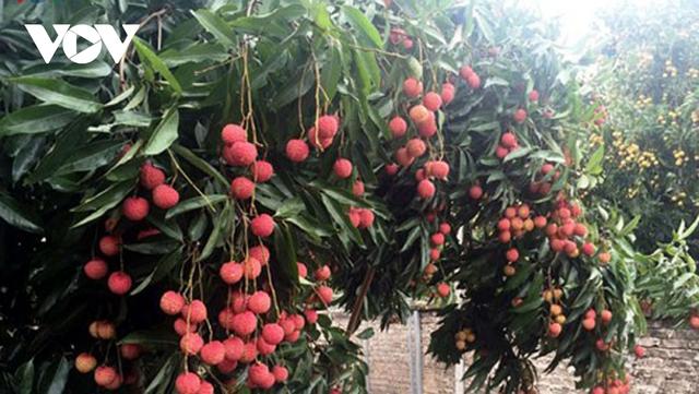 Trái cây vùng nhiệt đới được thị trường châu Âu quan tâm - Ảnh 1.