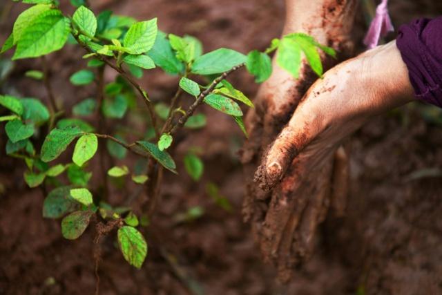 Đạo lý đời người như một cái cây: Đầu đội trời, chân đạp đất, tâm tĩnh như nước! - Ảnh 1.