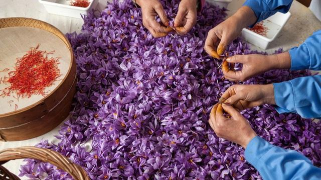 Nhà giàu Việt săn lùng nhụy hoa giá 450 triệu đồng/kg, chuyên gia chỉ rõ: Sẵn trong các thuốc rẻ tiền dễ kiếm! - Ảnh 3.