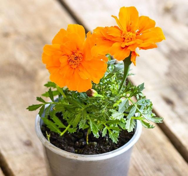 10 loại cây trồng trong nhà có thể gây ảnh hưởng xấu đến sức khỏe của bạn - Ảnh 5.