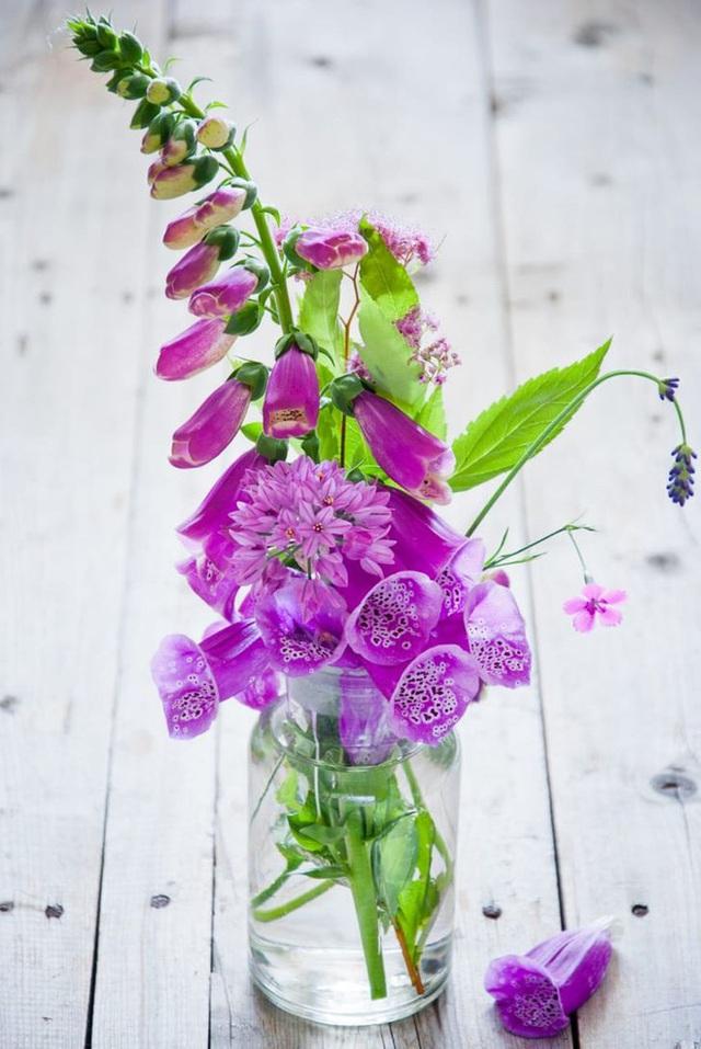 10 loại cây trồng trong nhà có thể gây ảnh hưởng xấu đến sức khỏe của bạn - Ảnh 8.