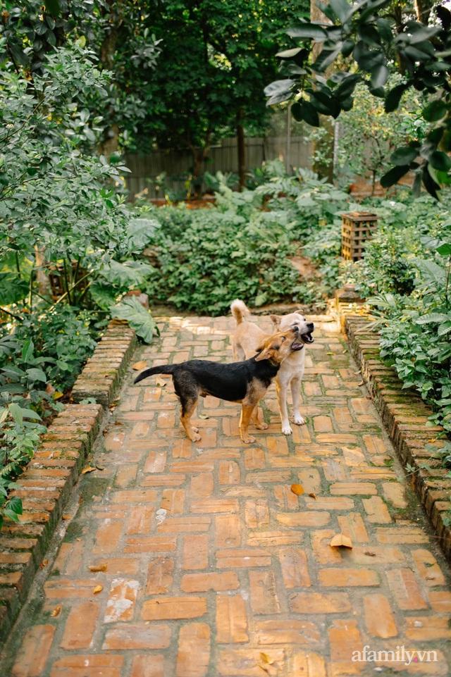 Cải tạo không gian rêu phong thành nhà vườn gói ghém những bình yên của người phụ nữ Hà Thành - Ảnh 20.