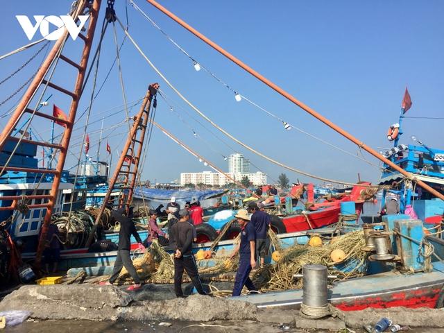 Ngư dân Đà Nẵng phấn khởi ra khơi thu tiền triệu sau bão - Ảnh 4.
