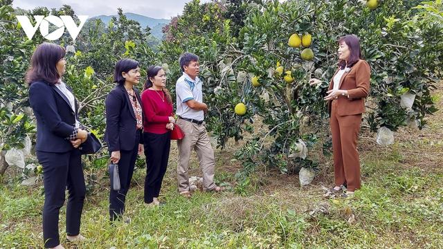 Học nhau cách làm giàu, nông dân có thu nhập hàng trăm triệu đồng - Ảnh 1.