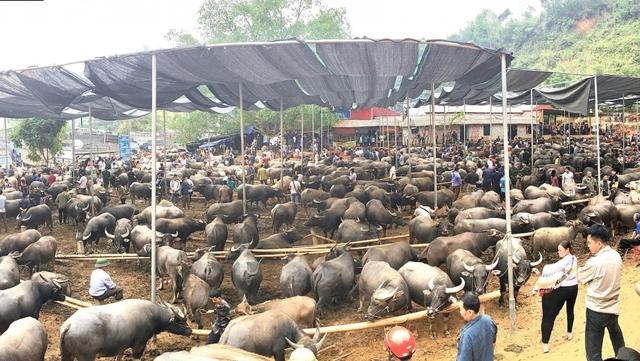 Bắc Kạn sẽ không đóng cửa chợ phiên trâu bò lớn nhất tỉnh - Ảnh 1.