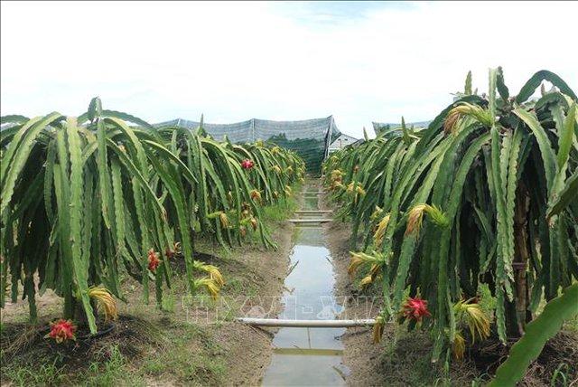 Thứ trưởng Trần Thanh Nam: Không phát triển nông nghiệp hữu cơ ồ ạt  - Ảnh 1.
