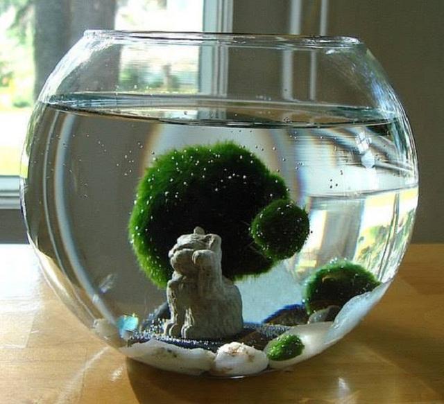 Ngoài kiếm, vải và gương, ít ai biết thứ tảo kỳ lạ này cũng được người Nhật tôn sùng như báu vật - Ảnh 4.