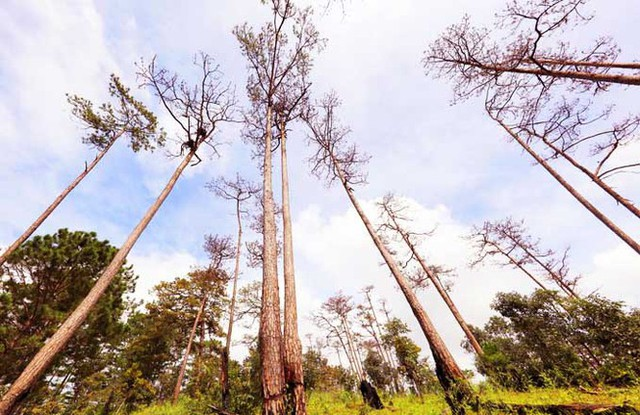 Xác định thủ phạm phá rừng phòng hộ ven đường Đà Lạt-Nha Trang - Ảnh 2.