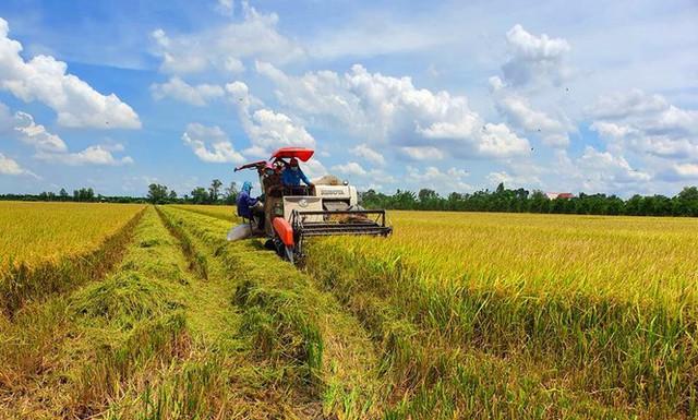 Giá lúa tốt, xuất khẩu gạo khả quan - Ảnh 1.