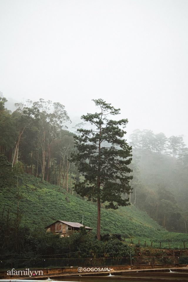 Thung lũng bí ẩn lạ lẫm ở Đà Lạt: Có hoa vàng cỏ xanh, suối mát lành đẹp như tranh vẽ, nhưng không phải cứ muốn đến là được, cũng chẳng có 3G để xài! - Ảnh 11.
