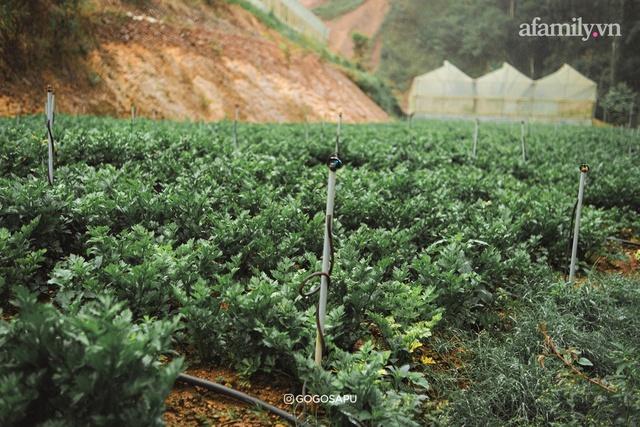 Thung lũng bí ẩn lạ lẫm ở Đà Lạt: Có hoa vàng cỏ xanh, suối mát lành đẹp như tranh vẽ, nhưng không phải cứ muốn đến là được, cũng chẳng có 3G để xài! - Ảnh 16.