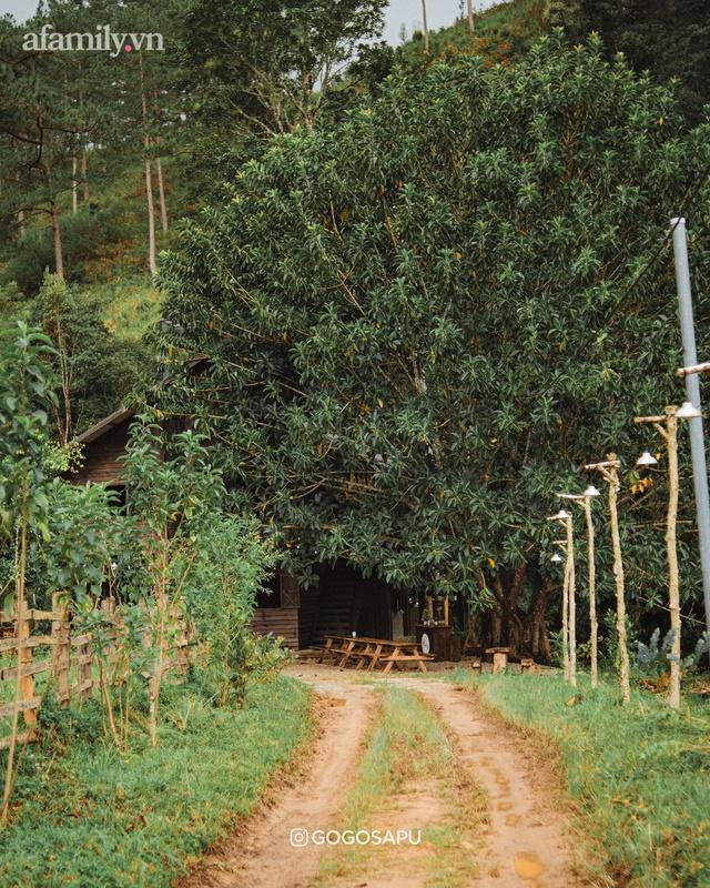 Thung lũng bí ẩn lạ lẫm ở Đà Lạt: Có hoa vàng cỏ xanh, suối mát lành đẹp như tranh vẽ, nhưng không phải cứ muốn đến là được, cũng chẳng có 3G để xài! - Ảnh 3.
