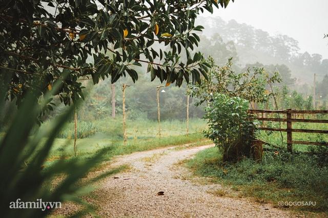 Thung lũng bí ẩn lạ lẫm ở Đà Lạt: Có hoa vàng cỏ xanh, suối mát lành đẹp như tranh vẽ, nhưng không phải cứ muốn đến là được, cũng chẳng có 3G để xài! - Ảnh 4.