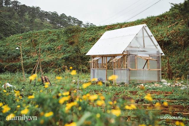 Thung lũng bí ẩn lạ lẫm ở Đà Lạt: Có hoa vàng cỏ xanh, suối mát lành đẹp như tranh vẽ, nhưng không phải cứ muốn đến là được, cũng chẳng có 3G để xài! - Ảnh 9.