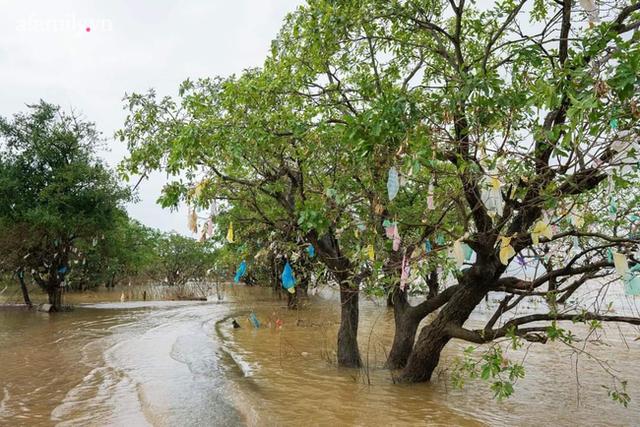 Trả tiền cho những chiếc túi nilon mắc lại cành cây sau lũ: Cách làm từ thiện đầy nhân văn ở Quảng Bình nhận nhiều lời khen từ cộng đồng mạng - Ảnh 4.