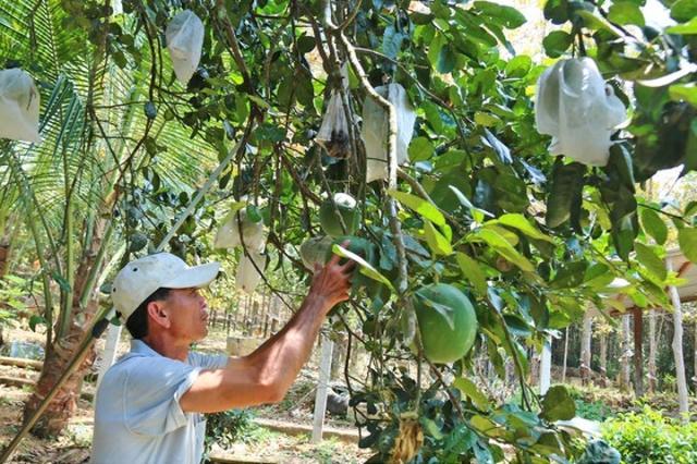 Nông dân thoát nghèo nhờ vườn cây chuyên canh  - Ảnh 5.