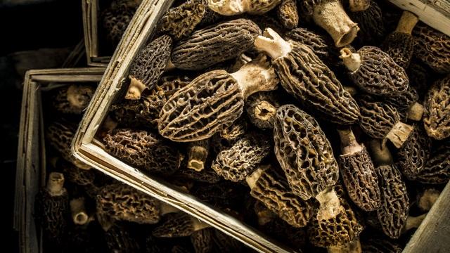 Loài nấm lạ nhìn như tổ ong có giá lên tới 11 triệu VNĐ/kg khiến giới đầu bếp Pháp mê đắm: Hương vị tuyệt hảo, nhưng lợi ích sức khỏe mới đáng chú ý - Ảnh 4.