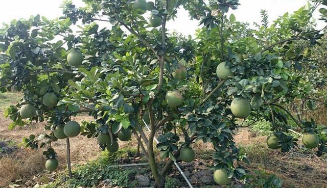 Thanh tra TPHCM chỉ ra hàng loạt sai phạm tại công ty được giao đất nông nghiệp - Ảnh 2.