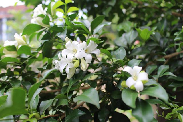 Chọn đúng loại cây cảnh hợp mệnh với từng con giáp: Cuối năm trồng trong nhà để mang lại nhiều may mắn và tài lộc - Ảnh 9.