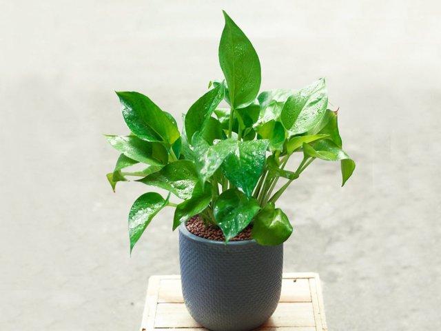 Chọn đúng loại cây cảnh hợp mệnh với từng con giáp: Cuối năm trồng trong nhà để mang lại nhiều may mắn và tài lộc - Ảnh 7.