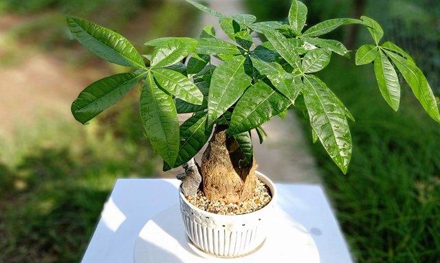 Chọn đúng loại cây cảnh hợp mệnh với từng con giáp: Cuối năm trồng trong nhà để mang lại nhiều may mắn và tài lộc - Ảnh 11.