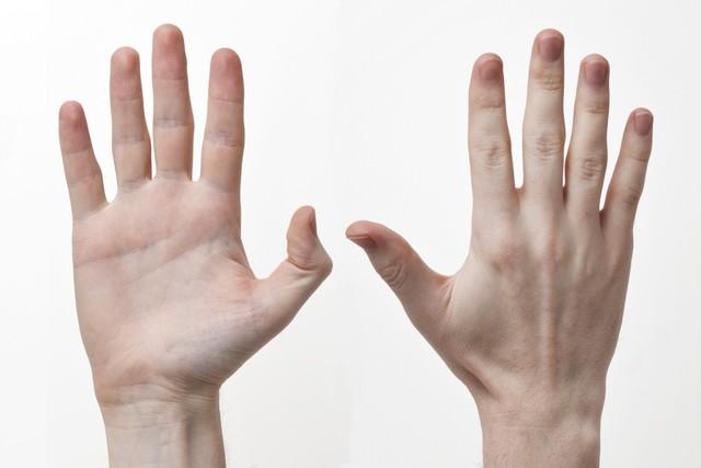 12 bộ phận trên cơ thể có thể hé lộ trí thông minh của bạn - Ảnh 5.