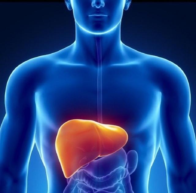 Gan rất dễ bị tổn thương do làm việc quá tải: Chuyên gia mách 4 thực phẩm bổ gan, giúp gan thải độc - Ảnh 1.