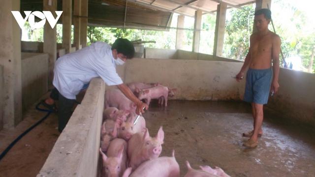Tái đàn chậm, nguy cơ nguồn cung thịt lợn sẽ giảm dịp Tết  - Ảnh 2.