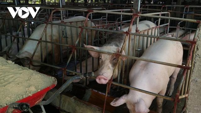 Giá thịt lợn liệu có tăng mạnh dịp cuối năm? - Ảnh 1.