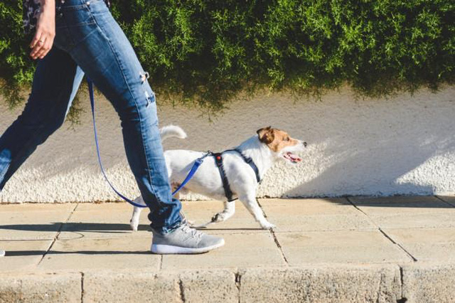 Dễ dàng để bắt đầu, duy trì đơn giản, đi bộ là bài tập thể dục hiệu quả đối với mọi đối tượng, nhưng bạn rất cần ghi nhớ 8 lưu ý này để tránh tác dụng ngược - Ảnh 1.
