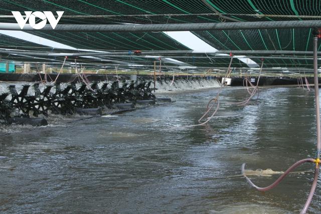 Sóc Trăng thắng lợi trong vụ tôm nuôi nước lợ năm 2020  - Ảnh 1.