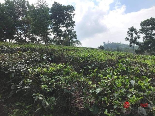 Người Hà Nội đua về các huyện mua đất vùng ven làm nhà vườn - Ảnh 3.