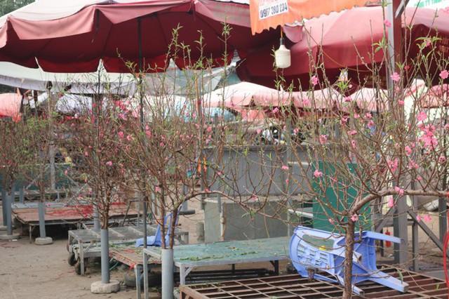 Đào Nhật Tân nở sớm, tràn ngập chợ hoa đón Tết Dương lịch - Ảnh 3.