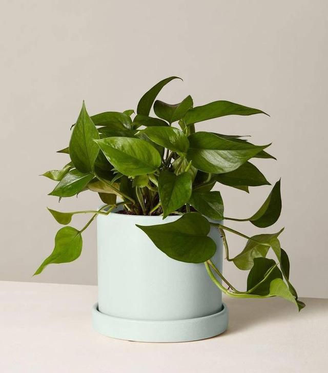 Trang hoàng nhà cửa bằng 7 loại cây xanh này vừa giúp thanh lọc không khí vừa đem tới không gian tươi xanh, hút phúc khí cho gia đình - Ảnh 6.