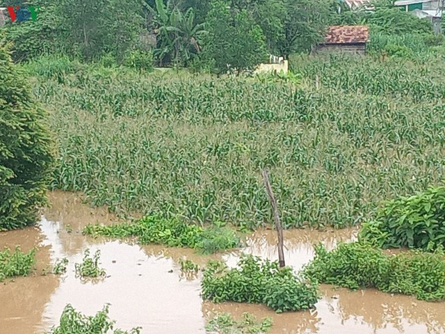 Mưa lớn gây ngập lụt, thiệt hại nặng nề tại Đăk Lăk - Ảnh 6.