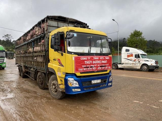 Heo thịt Thái Lan từng không cạnh tranh được với heo Việt, phải bán lỗ vốn  - Ảnh 1.
