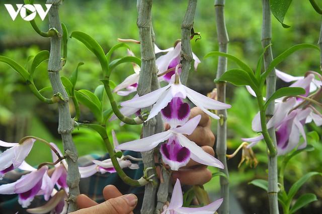 Phất lên nhanh chóng nhờ trồng loài hoa vương giả - Ảnh 3.