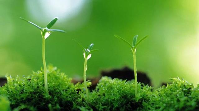Gặp sư thầy đang chăm sóc cây, phật tử được chỉ cho 4 việc cần áp dụng để nuôi dạy con cái nên người: Bậc cha mẹ nên biết! - Ảnh 1.