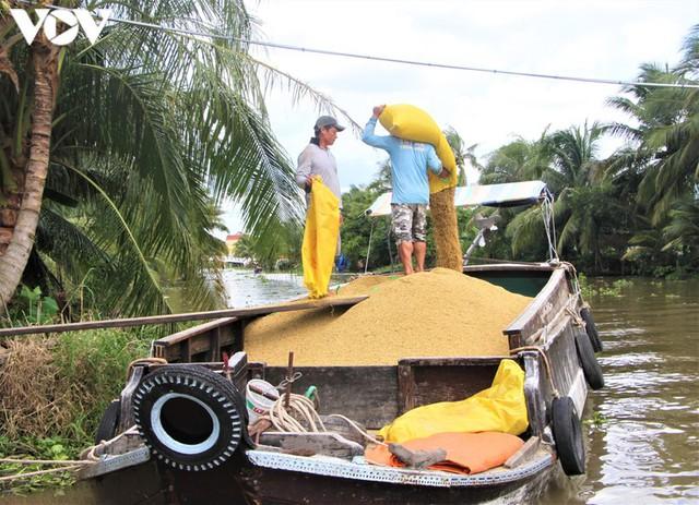 Lúa gạo tăng giá, doanh nghiệp và nông dân ĐBSCL phấn khởi. - Ảnh 2.