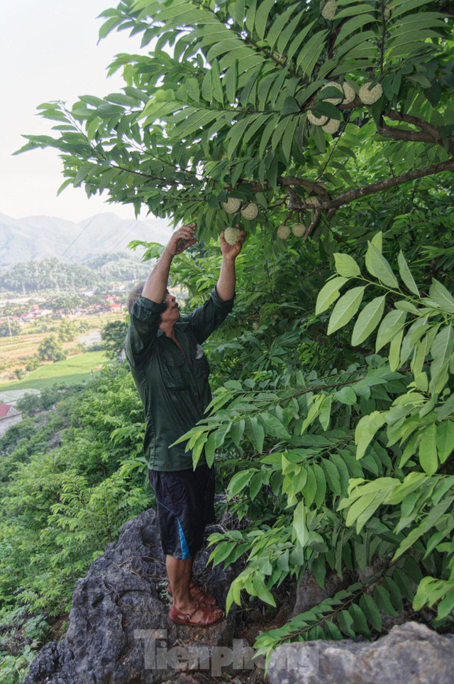 Lạng Sơn: Chợ na lớn nhất nước vào mùa - Ảnh 6.