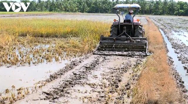 """Nông dân Trà Vinh """"hụt"""" thu vì lỡ nhận đặt cọc trước vụ lúa Hè thu - Ảnh 1."""