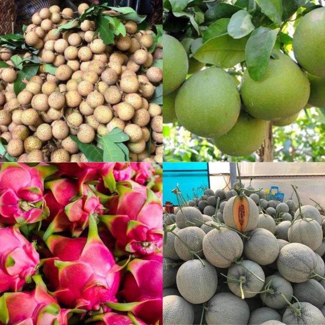 Dưa lưới đắt đỏ ế thừa mùa dịch, tìm mở lại đường xuất khẩu trái cây đặc sản - Ảnh 1.
