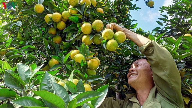 Người dân Sơn La thu nhập hàng tỷ đồng mỗi năm nhờ cây ăn quả - Ảnh 2.