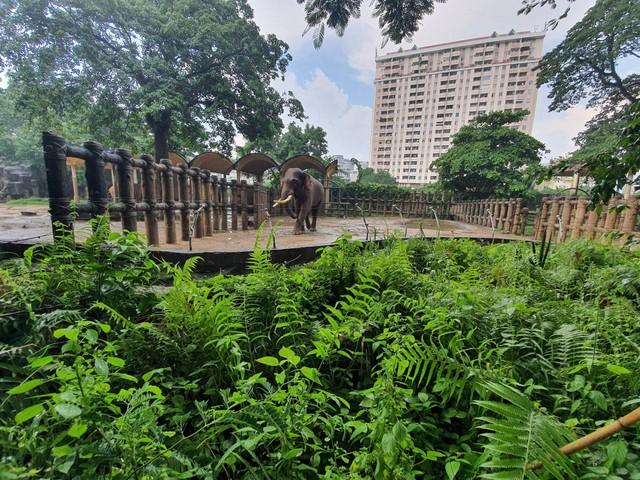 Hơn 300 nhân viên Thảo Cầm Viên Sài Gòn đồng lòng giảm 30% lương, vườn thú 156 tuổi kêu gọi sự ủng hộ từ cộng đồng - Ảnh 3.
