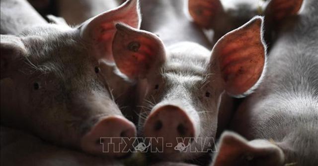 Đức kêu gọi Trung Quốc không cấm nhập khẩu thịt lợn của Đức do dịch tả lợn châu Phi - Ảnh 1.