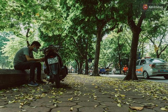 Con đường cây huyền thoại ở Hà Nội lại phủ đầy lá vàng rồi, phải chăng là mùa thu sắp về? - Ảnh 13.