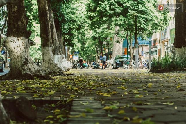Con đường cây huyền thoại ở Hà Nội lại phủ đầy lá vàng rồi, phải chăng là mùa thu sắp về? - Ảnh 14.
