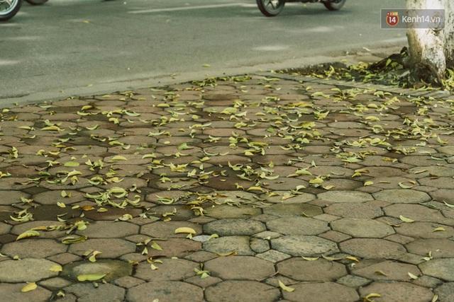 Con đường cây huyền thoại ở Hà Nội lại phủ đầy lá vàng rồi, phải chăng là mùa thu sắp về? - Ảnh 16.