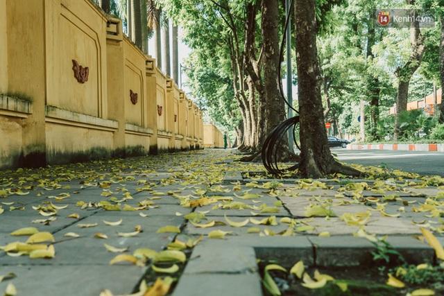Con đường cây huyền thoại ở Hà Nội lại phủ đầy lá vàng rồi, phải chăng là mùa thu sắp về? - Ảnh 4.