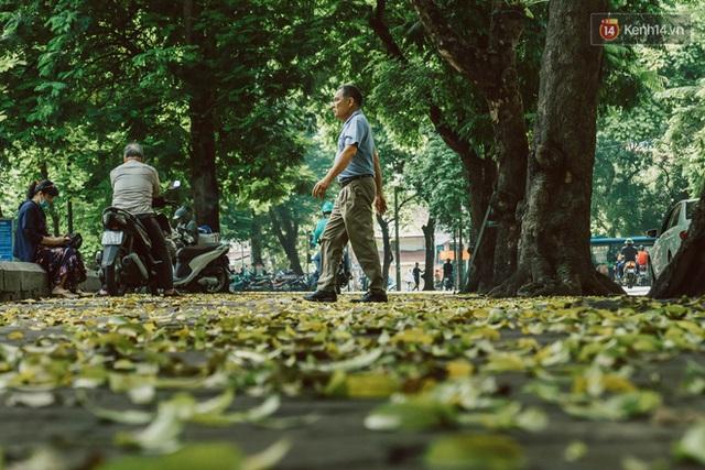 Con đường cây huyền thoại ở Hà Nội lại phủ đầy lá vàng rồi, phải chăng là mùa thu sắp về? - Ảnh 7.